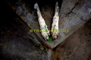 Sintra, Portugal: A dog rests at the APCA